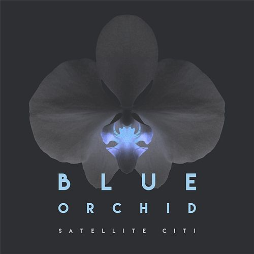 Blue Orchid by Satellite Citi