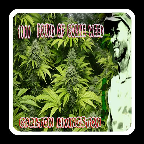 1000 Pound of Collie Weed de Carlton Livingston