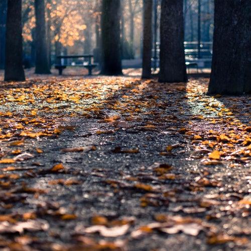 Autumn Leaves von Jiří Horák