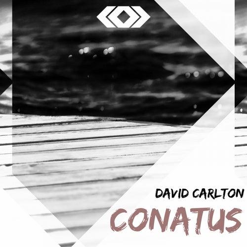 Conatus by David Carlton