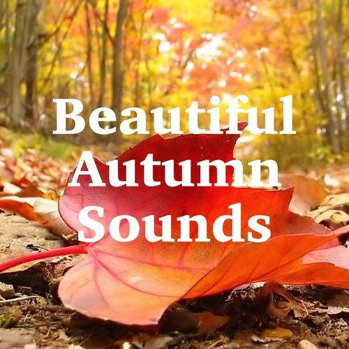 Beautiful Autumn Sounds de Various Artists
