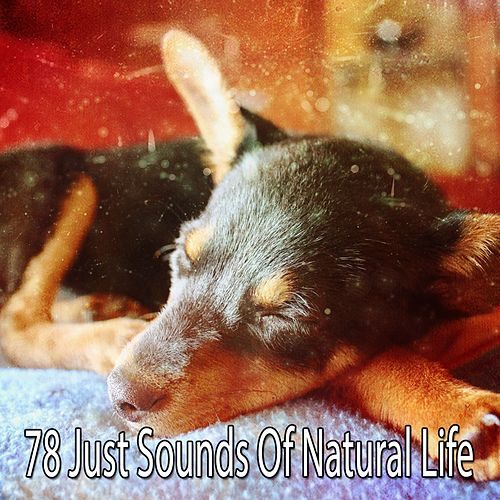 78 Just Sounds Of Natural Life von Best Relaxing SPA Music