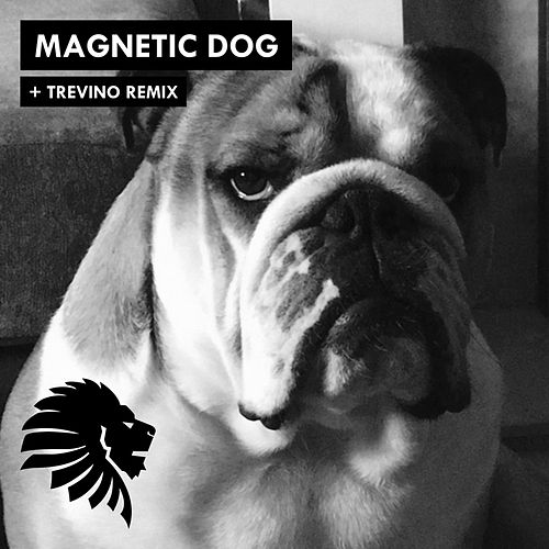 Magnetic Dog by Alan Fitzpatrick