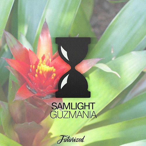 Guzmania by Samlight