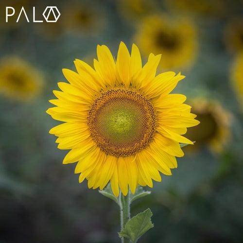 Make My Day de Pala