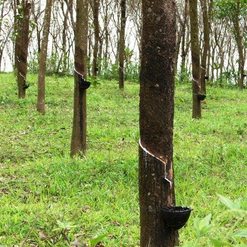 Herb Tree Hertz Toe von Nico