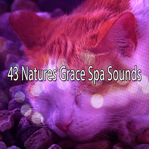 43 Natures Grace Spa Sounds von Best Relaxing SPA Music