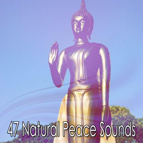 47 Natural Peace Sounds de Meditación Música Ambiente