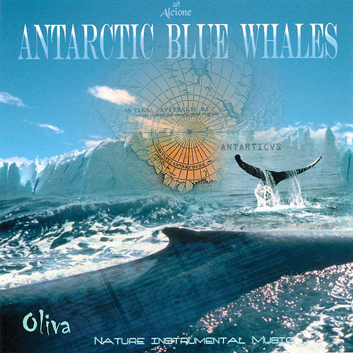Antarctic  Blue  Whales de Oliva