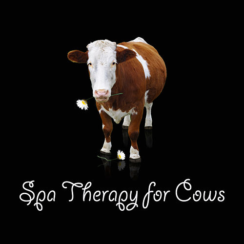 Spa Therapy for Cows by Relaxing Spa Music