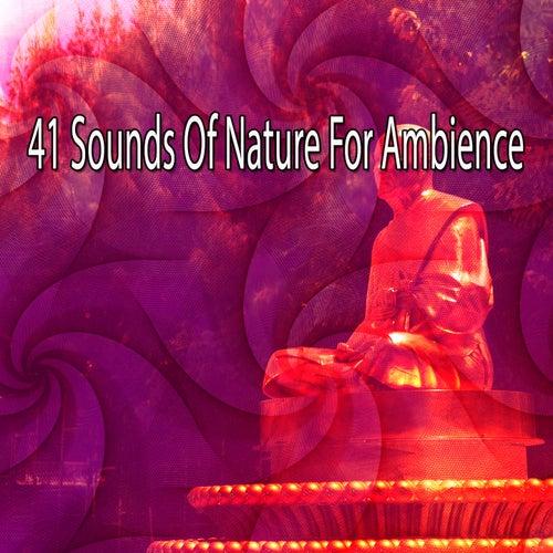 41 Sounds Of Nature For Ambience de Meditación Música Ambiente