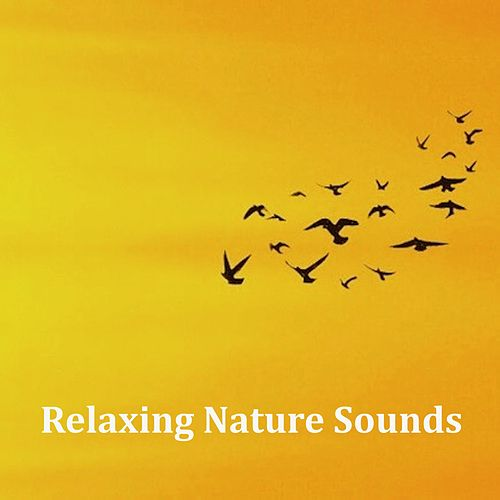 16 Relaxing Nature Sounds for Spa and Wellbeing by Relaxing Spa Music