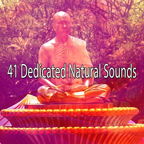 41 Dedicated Natural Sounds de Meditación Música Ambiente