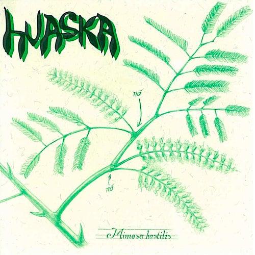 Mimosa Hostilis de Huaska