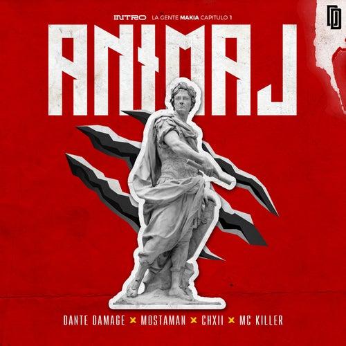 Animal de Dante Damage