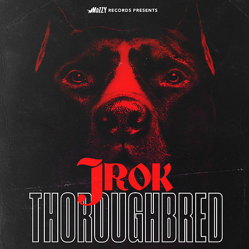 Thoroughbred von J-Rok