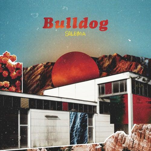 Bulldog de Soleima