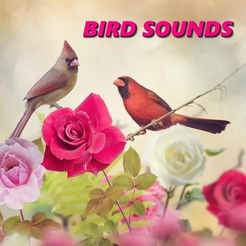 Bird Sounds by Nature Bird Sounds