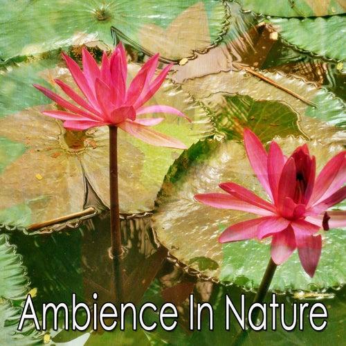 Ambience In Nature de Meditación Música Ambiente