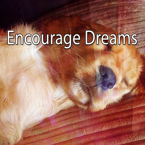 Encourage Dreams de Water Sound Natural White Noise
