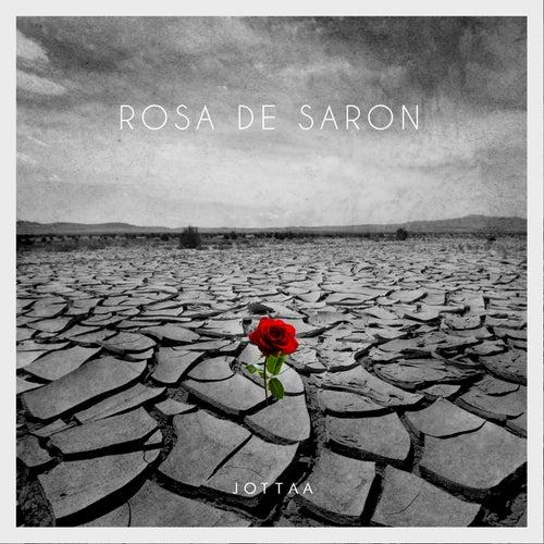 Rosa de Saron de Jotta A