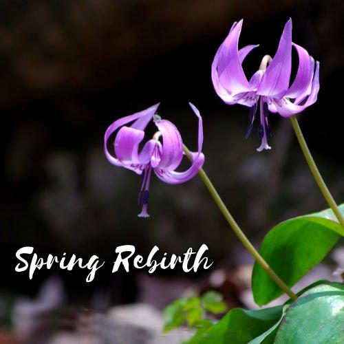 Spring Rebirth de soundscapes