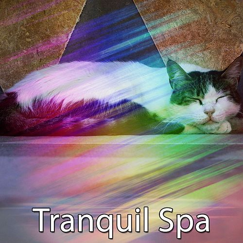 Tranquil Spa von Best Relaxing SPA Music