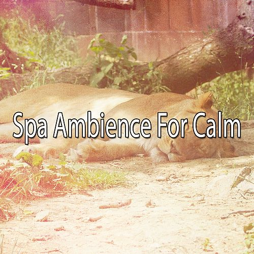 Spa Ambience For Calm von Best Relaxing SPA Music
