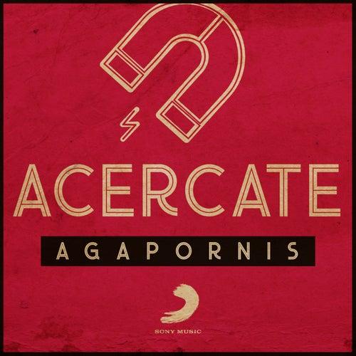 Acercate de Agapornis