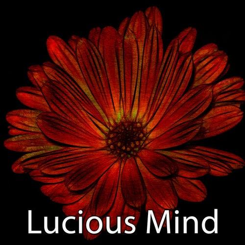 Lucious Mind de Meditación Música Ambiente