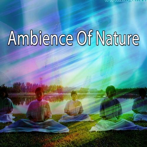 Ambience Of Nature de Meditación Música Ambiente