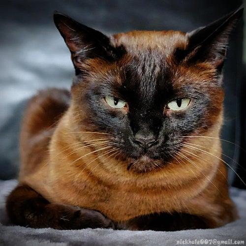 Cat Album Testing Testing von Loyal Scam