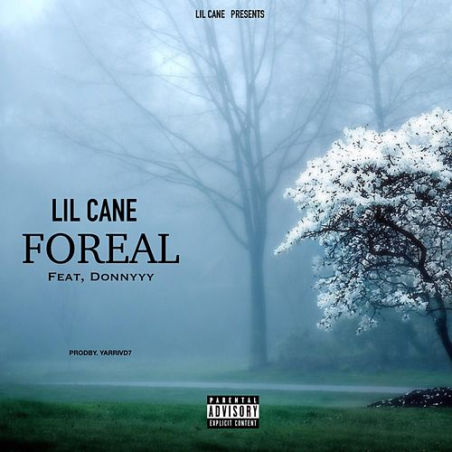 Foreal by Lil Cane