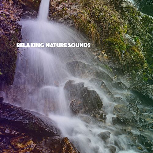 Relaxing Nature Sounds by Various Artists