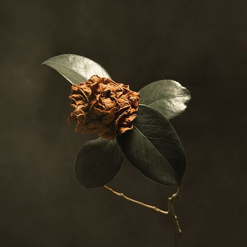 Young Sick Camellia by St. Paul & The Broken Bones