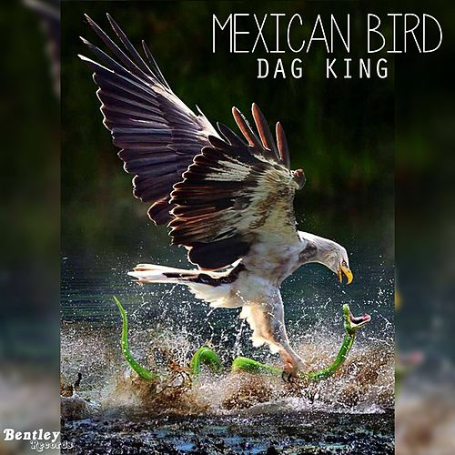 Mexican Bird de Dag King