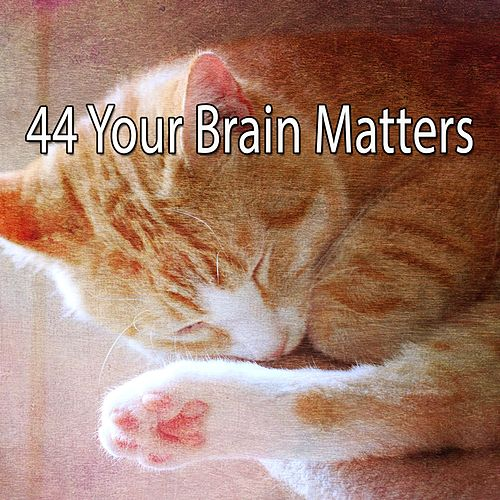 44 Your Brain Matters von Best Relaxing SPA Music