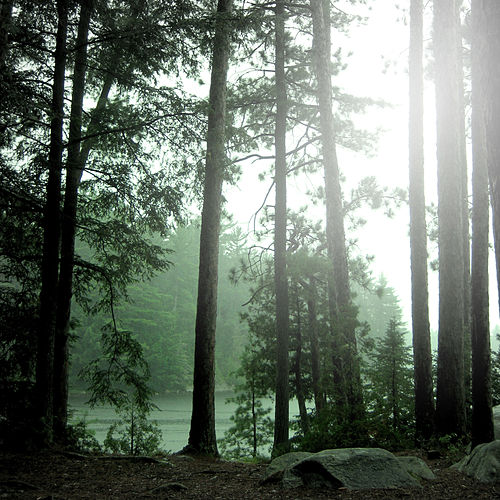 The Trees (feat. Alanna J Brown) by Shinogo