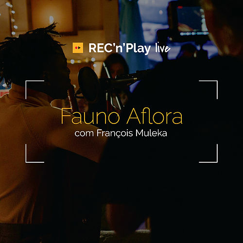 Fauno Aflora (Acústico) by François Muleka