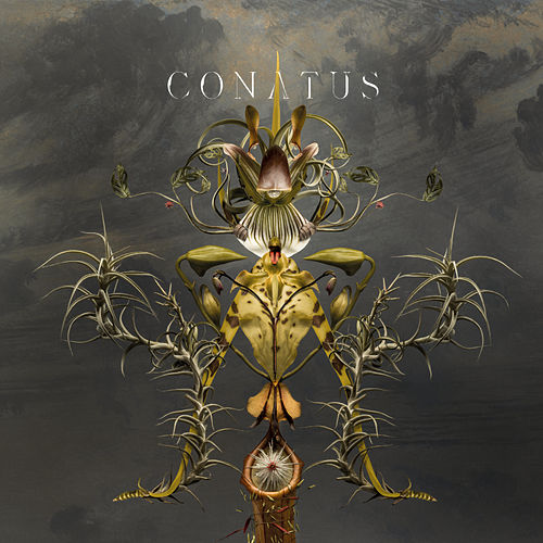 Conatus by Joep Beving