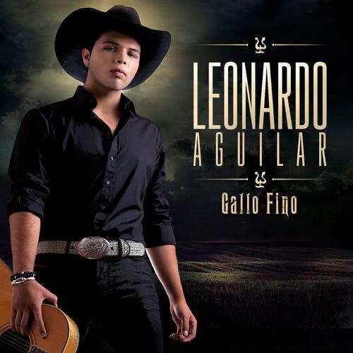 Gallo Fino by Leonardo Aguilar