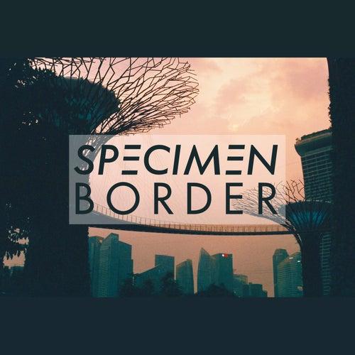 Border de Specimen