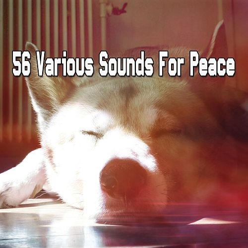 56 Various Sounds For Peace von Rockabye Lullaby