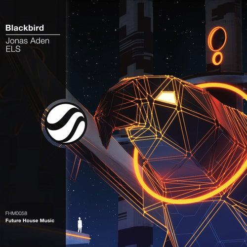Blackbird von Jonas Aden