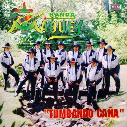 Tumbando Caña by Banda Maguey