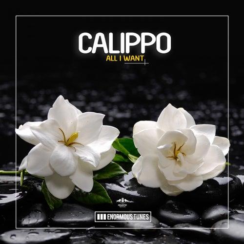 All I Want von Calippo