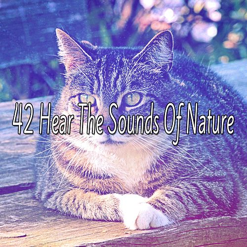 42 Hear The Sounds Of Nature von Best Relaxing SPA Music