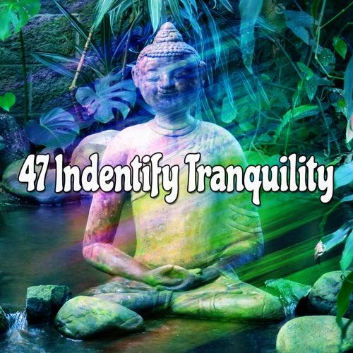 47 Indentify Tranquility de Meditación Música Ambiente