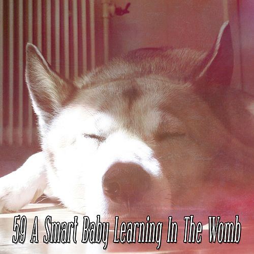 59 A Smart Baby Learning In The Womb by Baby Sleep Sleep