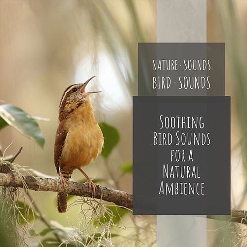 Soothing Bird Sounds For A Natural Ambience by Nature Sounds (1)